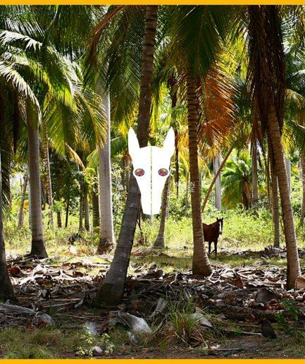 Cadeuakaart-Giftcard-Million-Horse-standaard-paardenhaar armband - Million Horse - paardenhaar sieraad – paardenhaar armband zilver – paardenhaar– paardenhaar armband goedkoop –– million-horse – millionhorse – million-horses – armband van paardenhaar laten maken – paarden armband – sieraad paardenhaar – vlecht paardenhaar – paardenhaarsieraad – armband paardenhaar zelf maken
